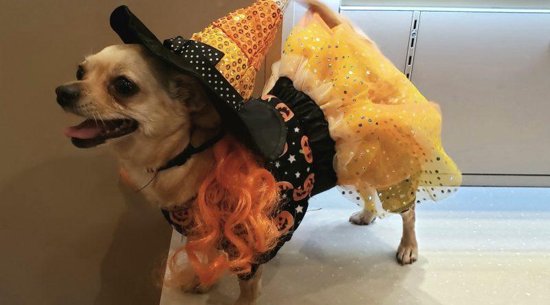 Lynnwood Halloween Pet Costume 2