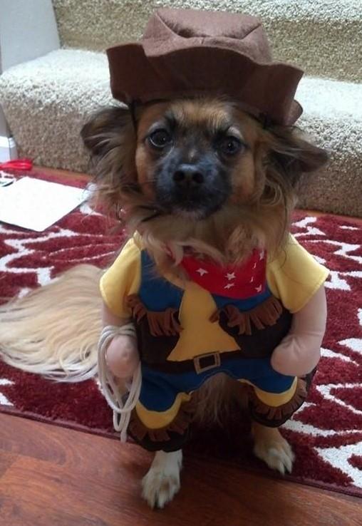 Lynnwood Halloween Pet Costume