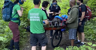 dog rescue on Lime Kiln Trail