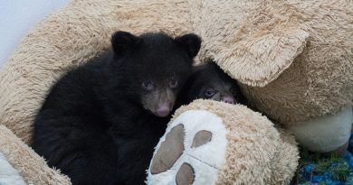 PAWS Bears