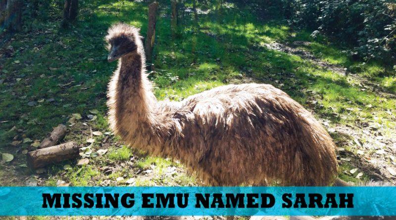 AJ Acre Emu