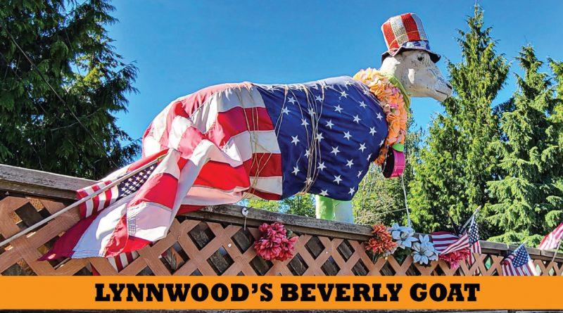 Lynnwood Beverly Goat